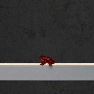 Frosch in rot