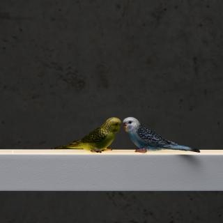 Vögel in bunt